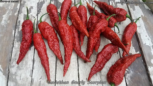 Leviathan Gnarly Scorpion - Pepper Seeds - White Hot Peppers