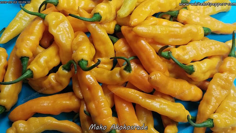 Mako Akokosrade - Pepper Seeds - White Hot Peppers