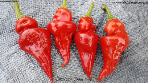 Monkey Face Red - Pepper Seeds - White Hot Peppers
