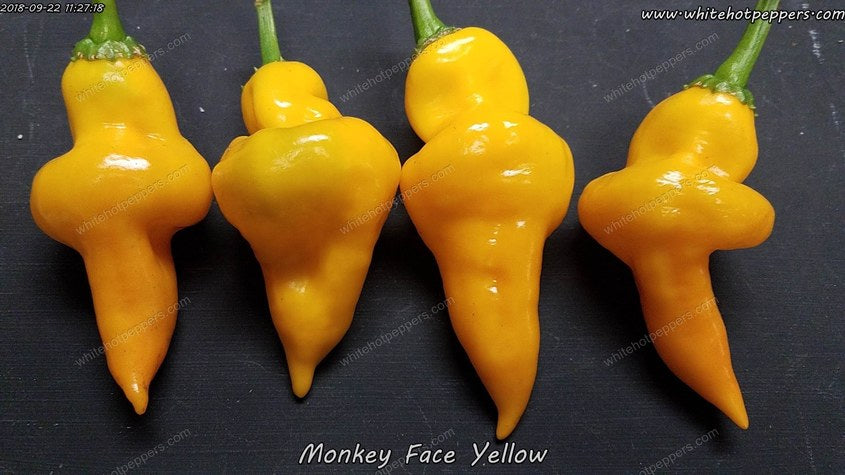 Monkey Face Yellow - Pepper Seeds - White Hot Peppers