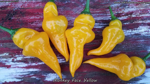 Monkey Face Yellow - Non Isolated Seeds - White Hot Peppers
