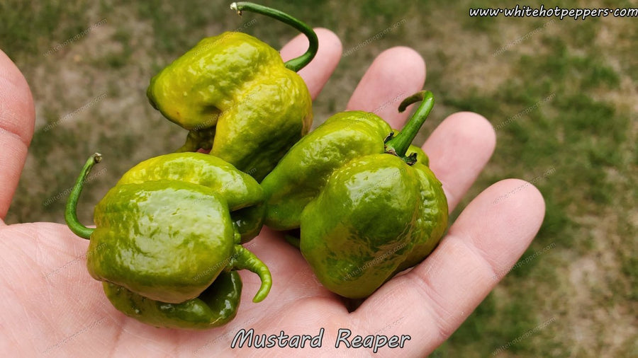 Mustard Reaper - Pepper Seeds - White Hot Peppers