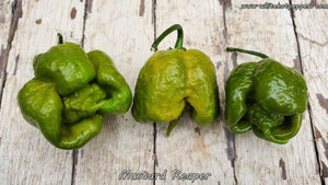 Mustard Reaper (Isolated) - Pepper Seeds - White Hot Peppers