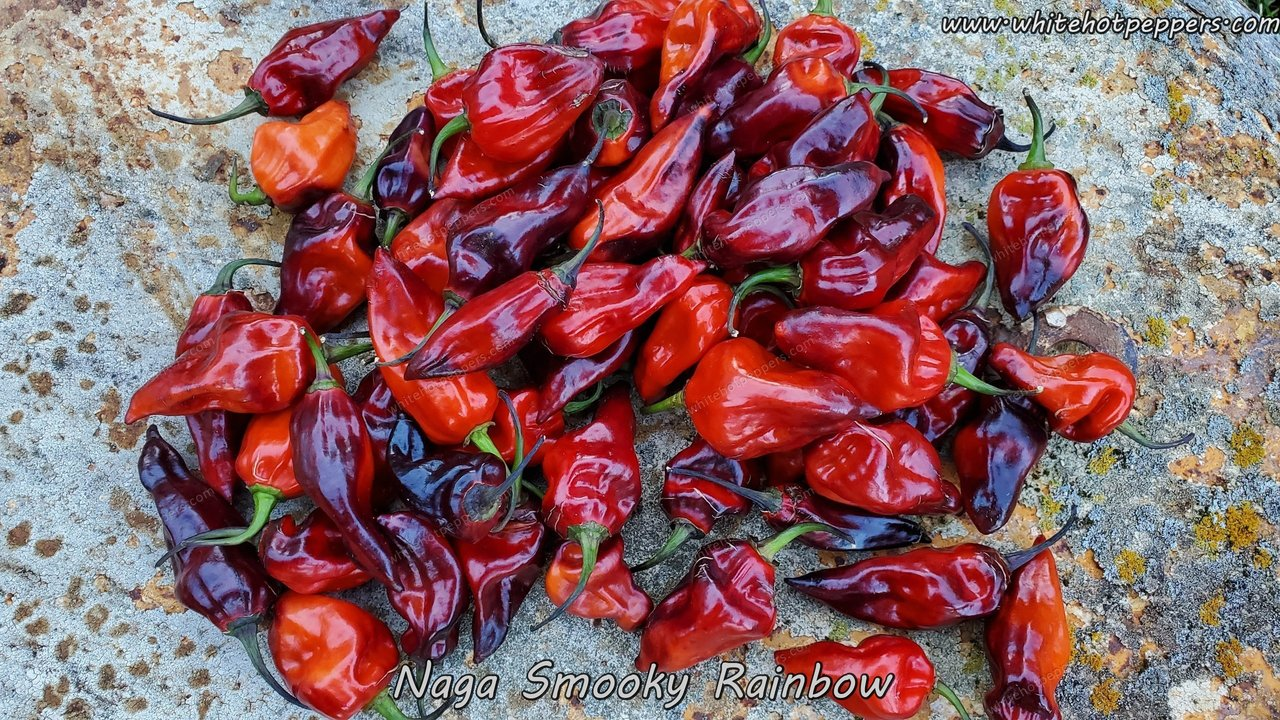 Naga Smooky Rainbow - Pepper Seeds - White Hot Peppers