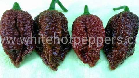 Nagabrains Chocolate - Pepper Seeds - White Hot Peppers