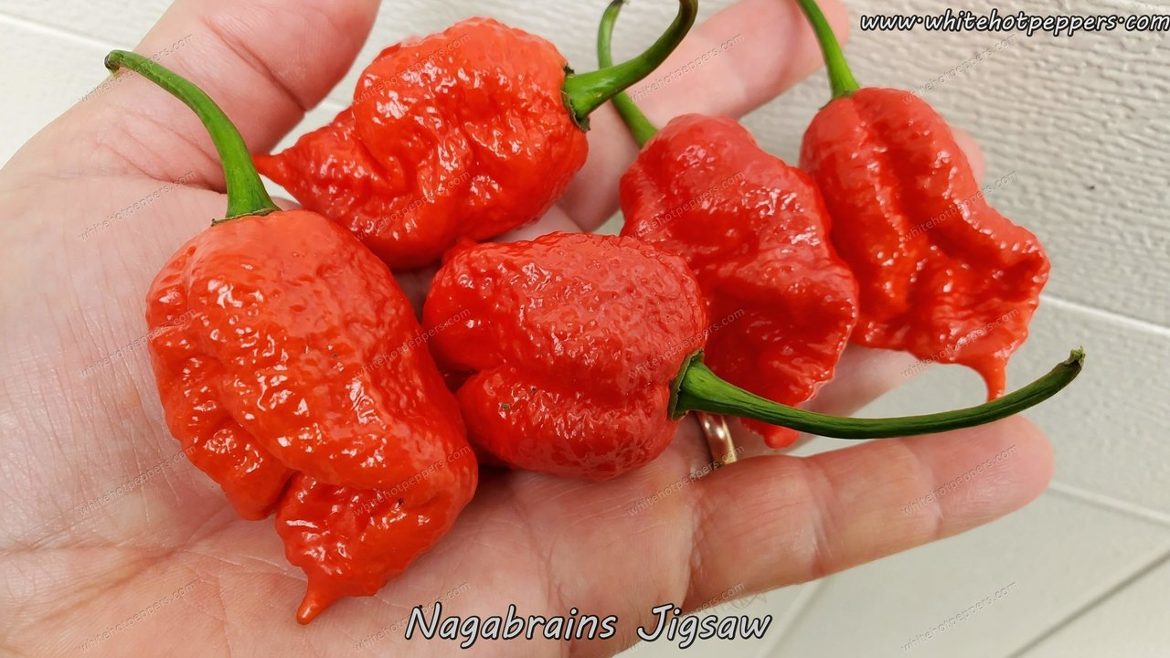Nagabrains Jigsaw - Pepper Seeds - White Hot Peppers