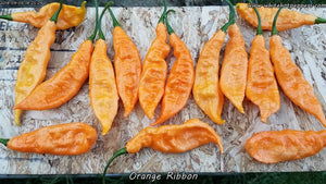 Orange Ribbon - Pepper Seeds - White Hot Peppers