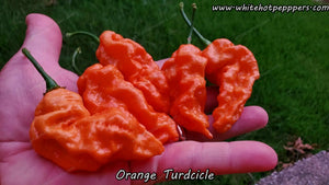 Orange Turdcicle - Pepper Seeds - White Hot Peppers