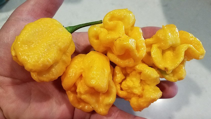 Orange Yaky - Pepper Seeds - White Hot Peppers
