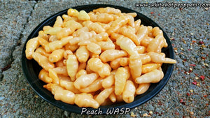 Peach Wasp - Pepper Seeds - White Hot Peppers