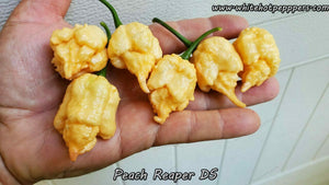 Peach Reaper DS - Pepper Seeds - White Hot Peppers
