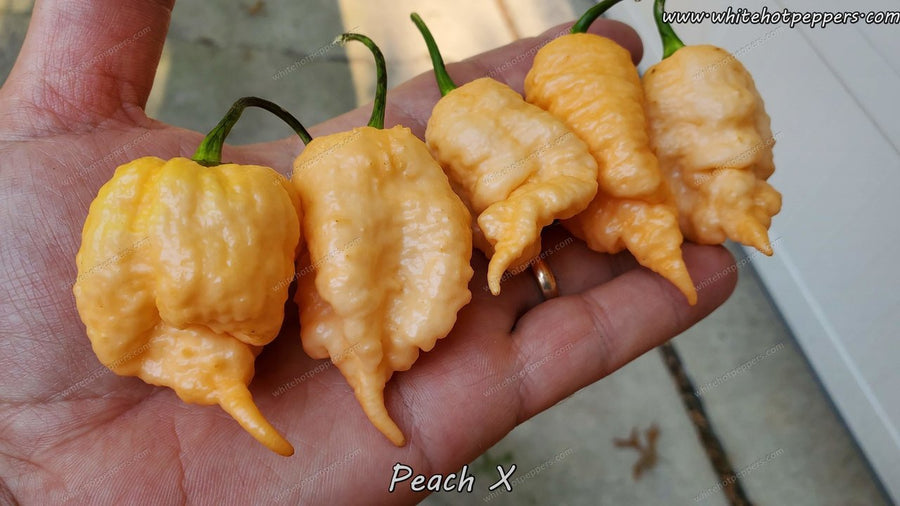 Peach X - Pepper Seeds - White Hot Peppers
