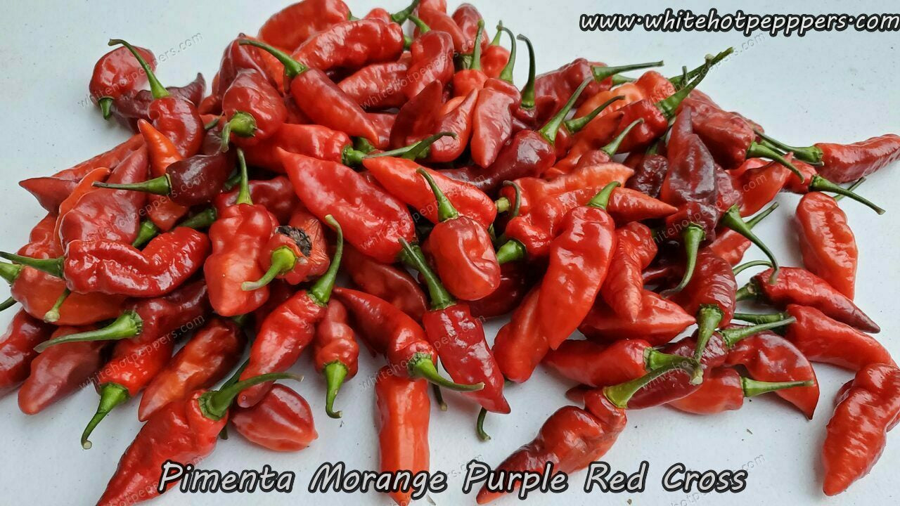 Jes's Moranga Purple/Red - Pepper Seeds - White Hot Peppers