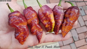 Pink Tiger x Peach Bhut (Isolated) - Pepper Seeds - White Hot Peppers