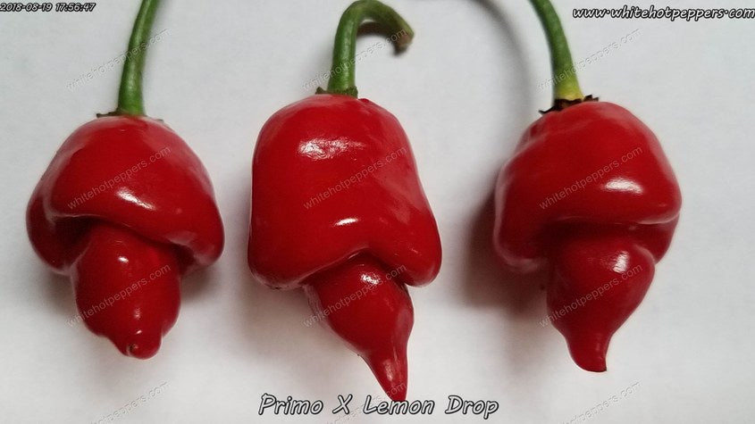Primo x Lemon Drop - Pepper Seeds - White Hot Peppers