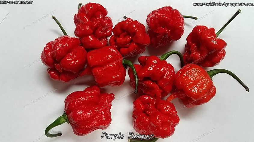 Purple Reaper - Pepper Seeds - White Hot Peppers