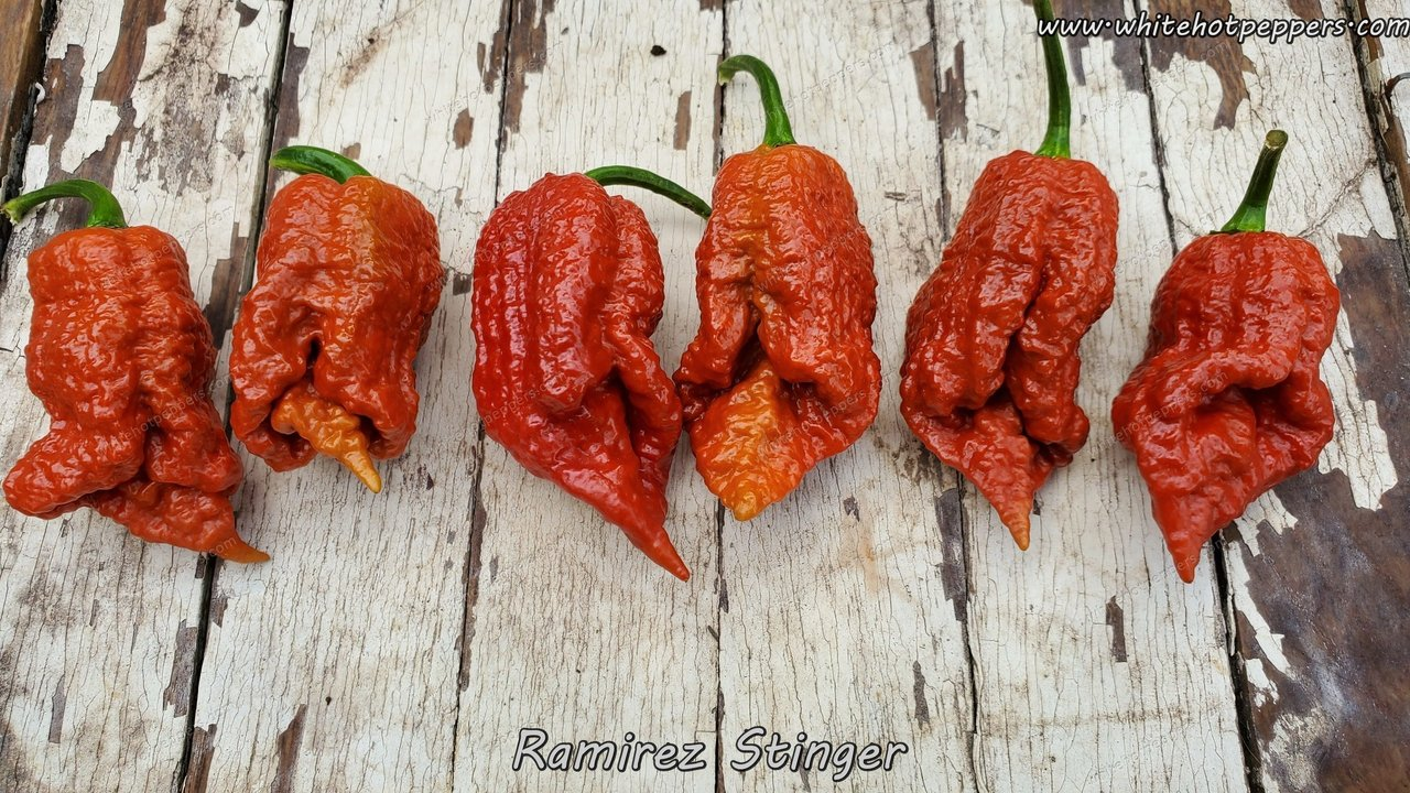 Ramirez Stinger - Pepper Seeds - White Hot Peppers