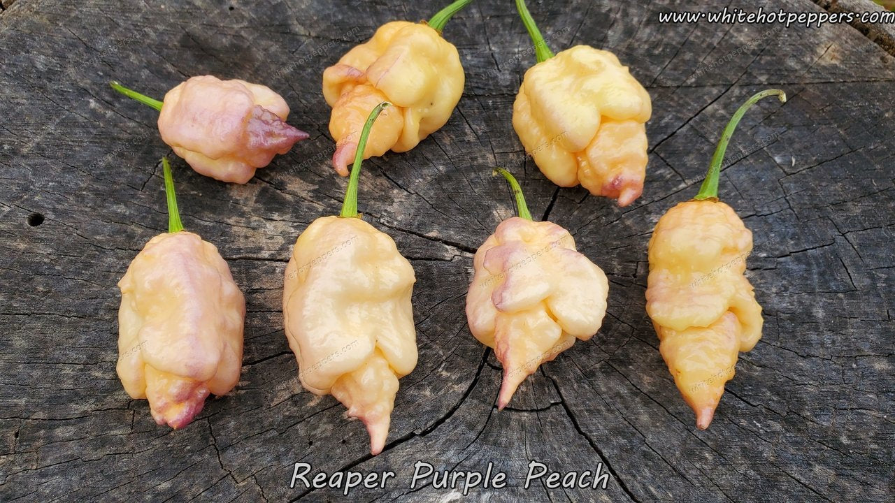 Reaper Purple Peach - Pepper Seeds - White Hot Peppers