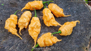 Reaper x Jay's Peach Ghost Scorpion - Pepper Seeds - White Hot Peppers