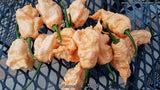 Carolina Reaper x Jay's Peach Ghost Scorpion - Pepper Seeds - White Hot Peppers