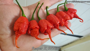 Reaper x SRTSL (Isolated) - Pepper Seeds - White Hot Peppers