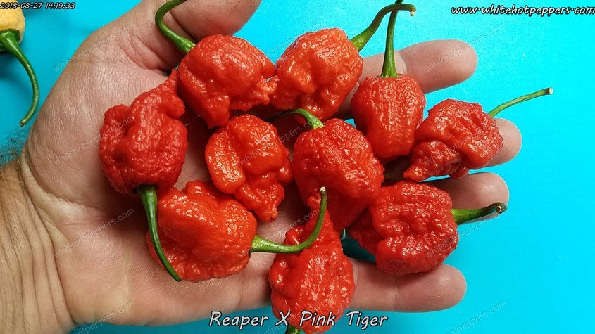 Reaper x Pink Tiger - Pepper Seeds - White Hot Peppers