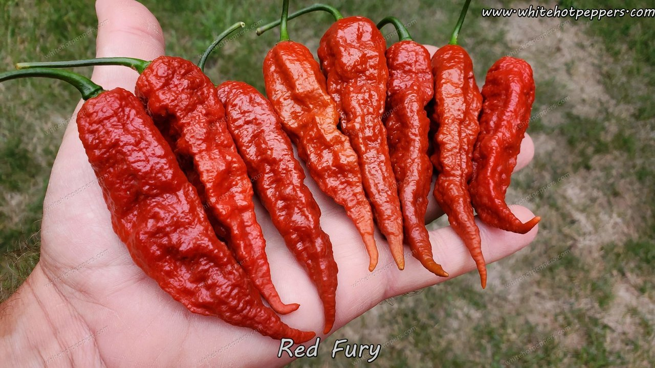 Red Fury - Pepper Seeds - White Hot Peppers
