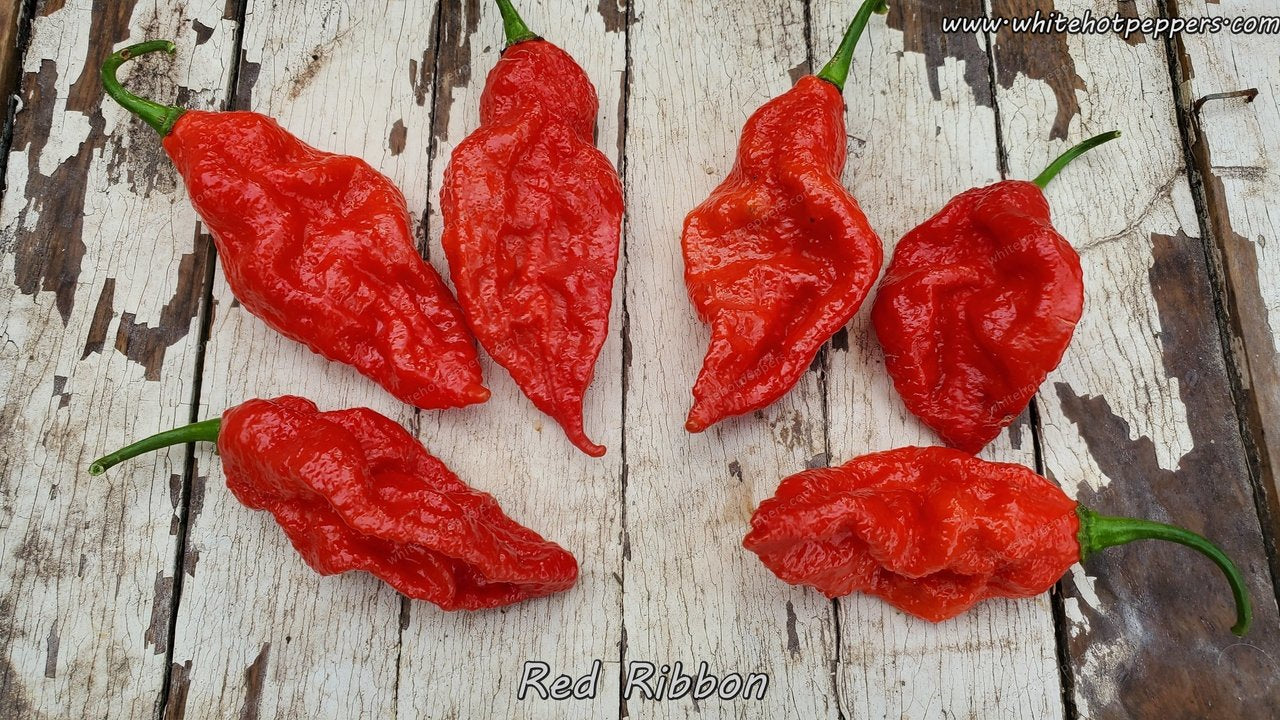 Red Ribbon - Pepper Seeds - White Hot Peppers