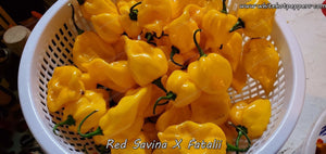 Red Savina x Fatalii - Pepper Seeds - White Hot Peppers