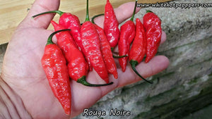 Rouge Noir - Pepper Seeds - White Hot Peppers