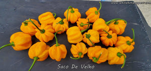 Saco de Velho - Pepper Seeds - White Hot Peppers