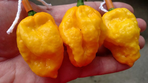 Scotch Bonnet MOA - Pepper Seeds - White Hot Peppers