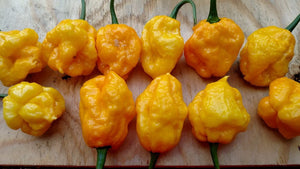 Scotch Bonnet MOA (Isolated) - Pepper Seeds - White Hot Peppers