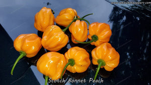 Scotch Bonnet Peach - Pepper Seeds - White Hot Peppers