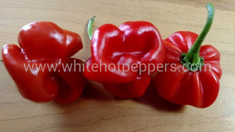 Scotch Bonnet Safi Red - Pepper Seeds - White Hot Peppers