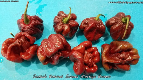 Scotch Bonnet Sweet Moruga Brown - Non Isolated Seeds - White Hot Peppers