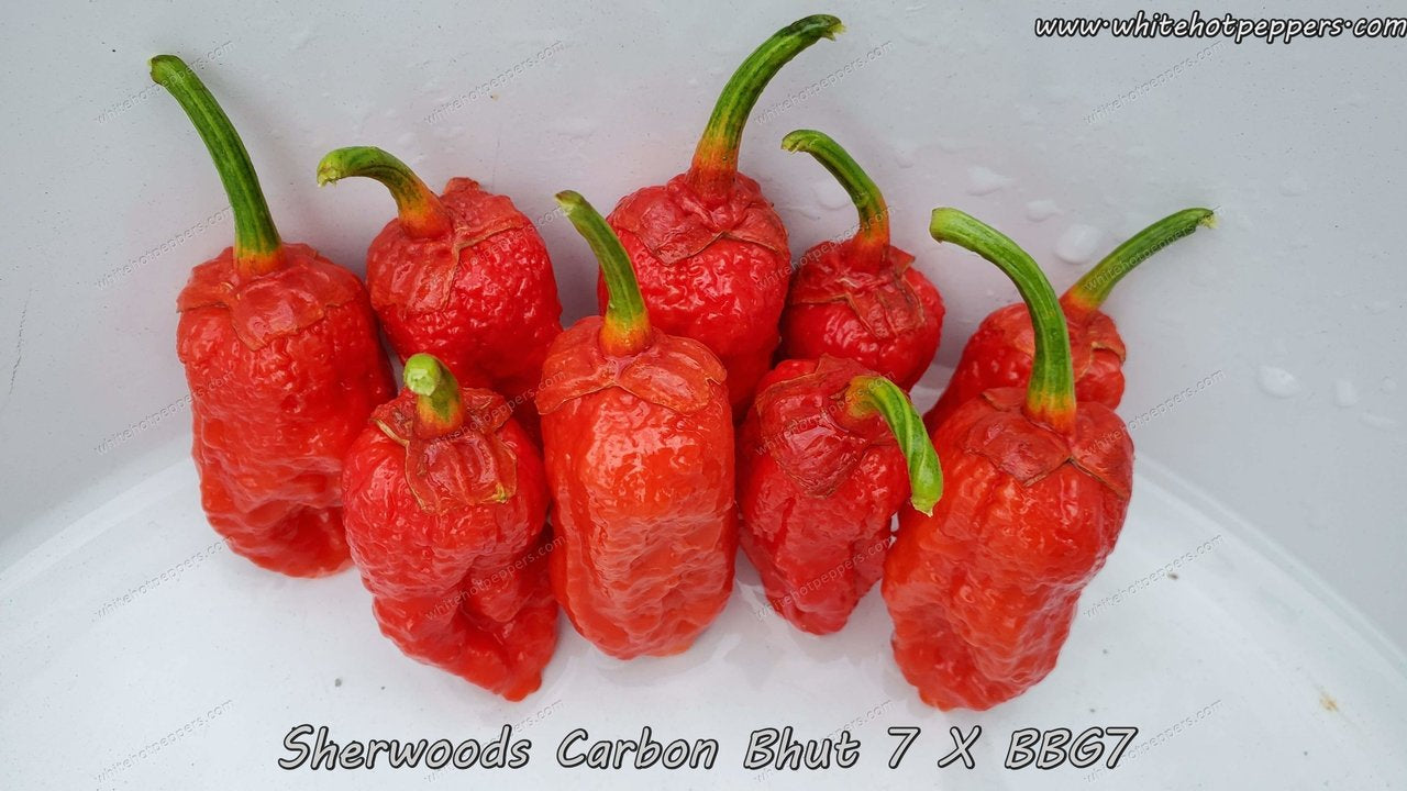 Carbon Bhut 7 x BBG - Pepper Seeds - White Hot Peppers