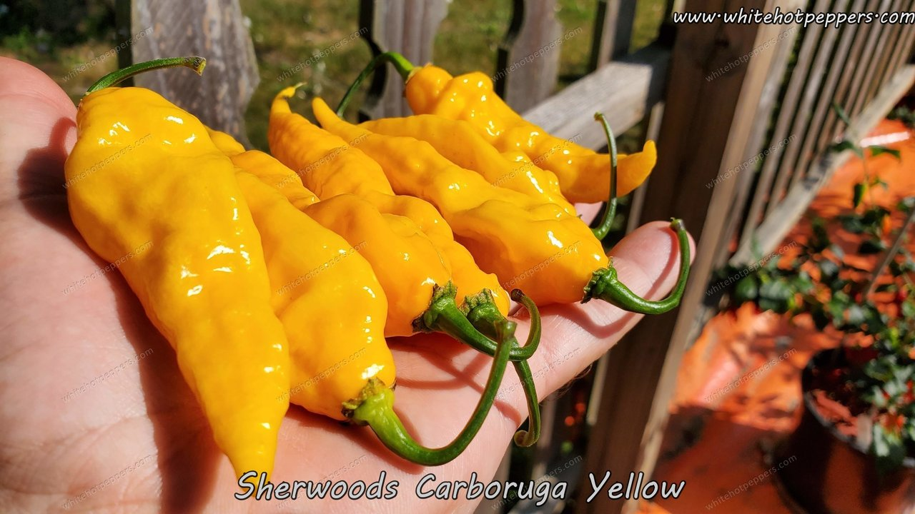 Sherwood's Carboruga Yellow - Pepper Seeds - White Hot Peppers