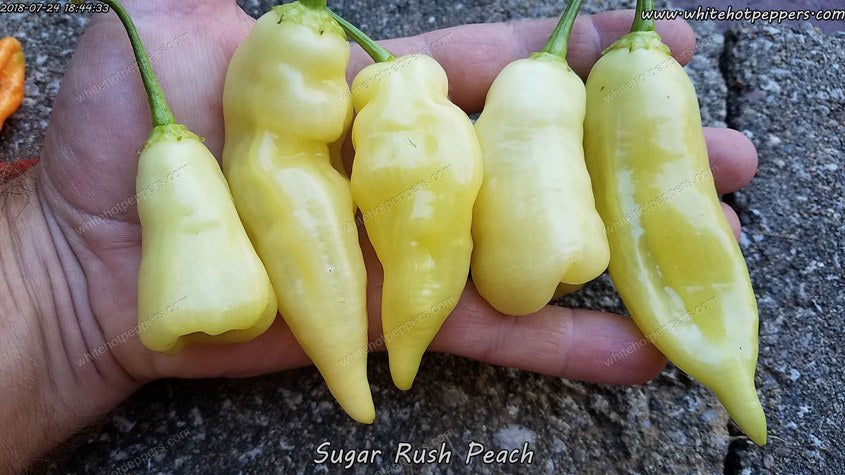 Sugar Rush Peach - Pepper Seeds - White Hot Peppers