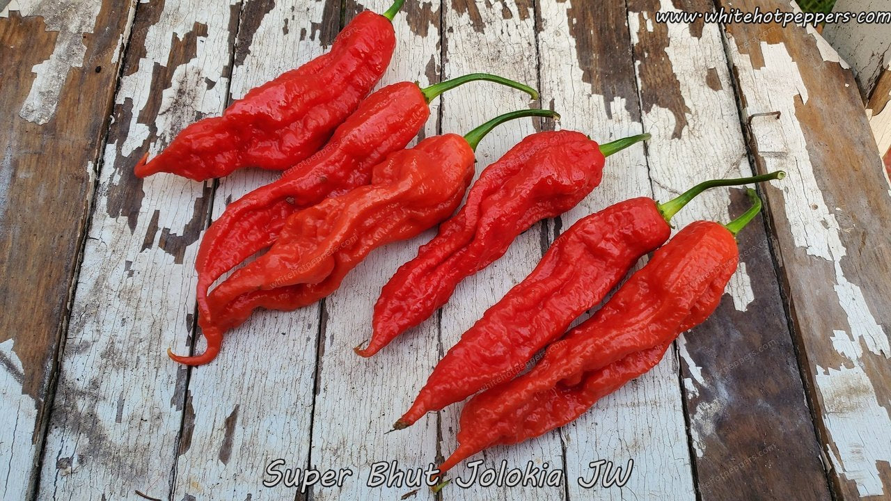 Super Bhut Jolokia JW - Pepper Seeds - White Hot Peppers