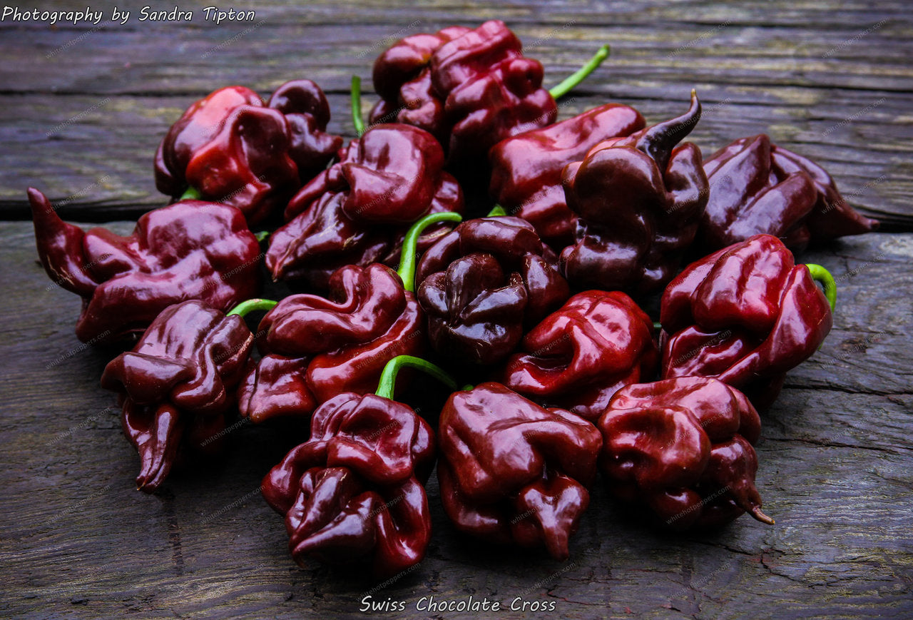 Swiss Chocolate Cross - Pepper Seeds - White Hot Peppers