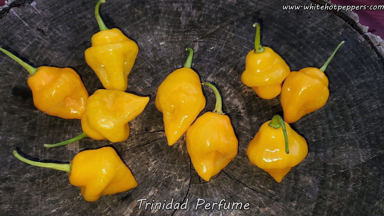 Trinidad Perfume - Pepper Seeds - White Hot Peppers