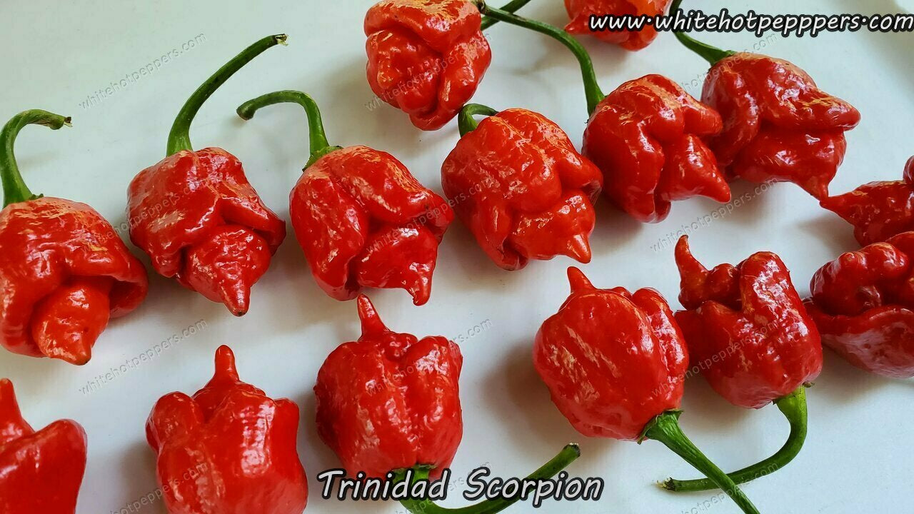 Trinidad Scorpion - Pepper Seeds - White Hot Peppers