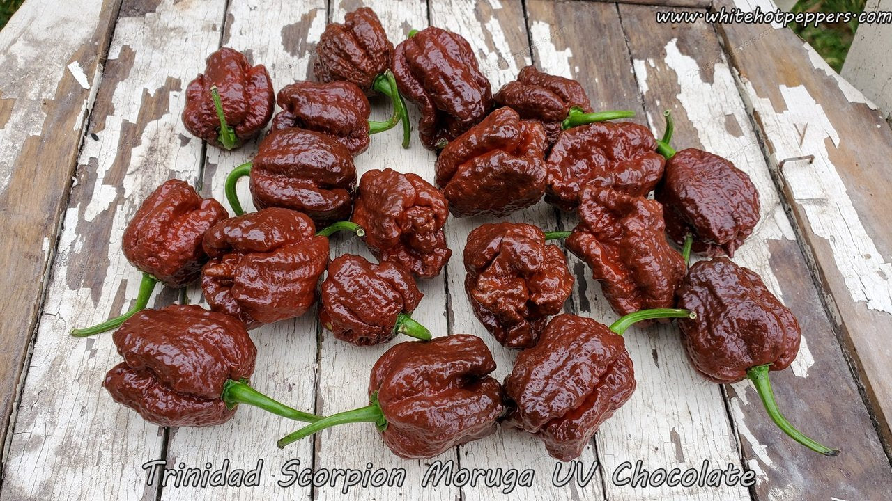 Trinidad Scorpion Moruga UV Chocolate - Pepper Seeds - White Hot Peppers