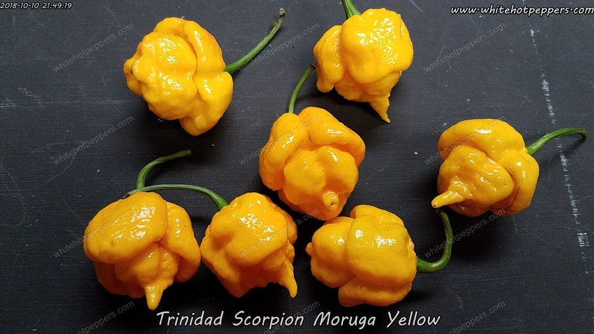 Trinidad Scorpion Moruga Yellow - Pepper Seeds - White Hot Peppers