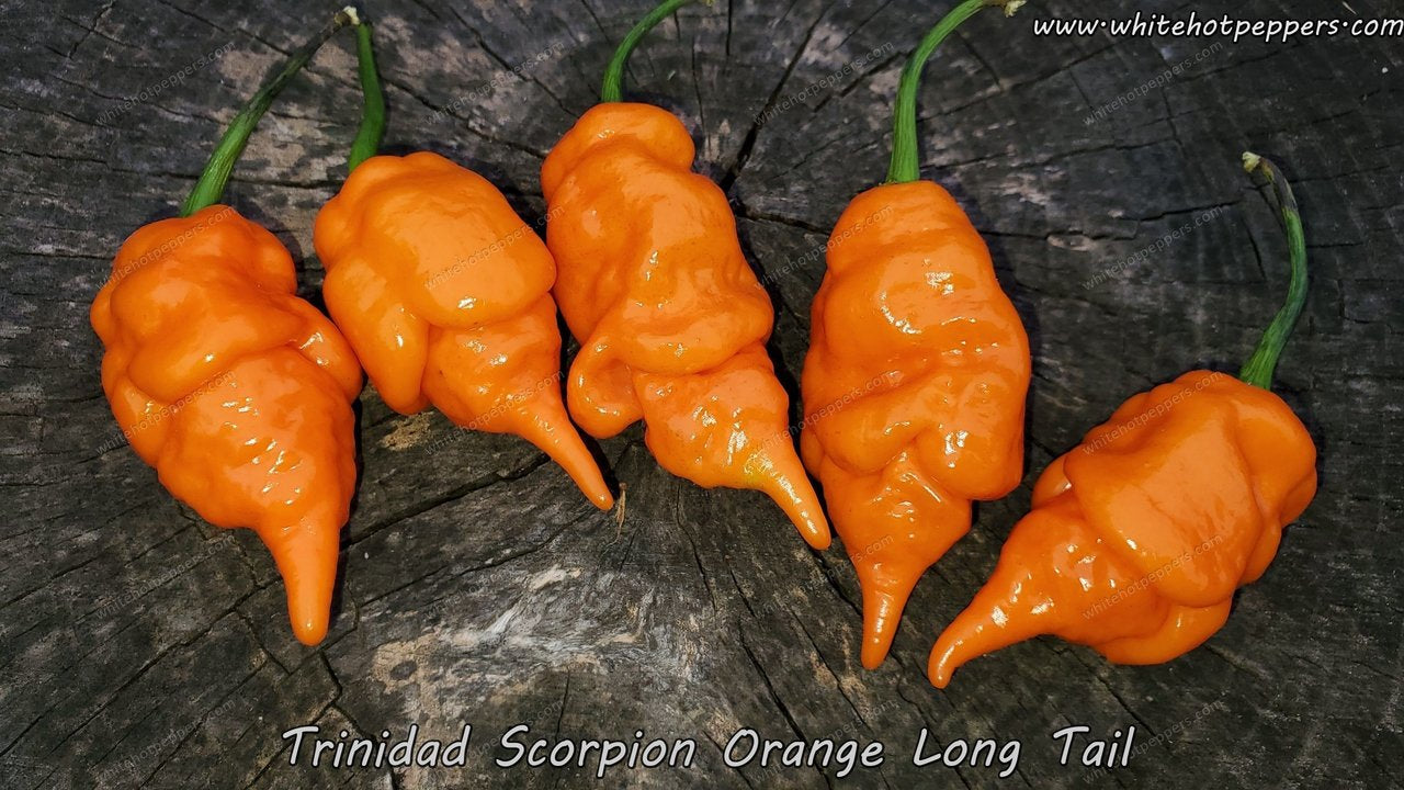 Trinidad Scorpion Orange Long Tail - Pepper Seeds - White Hot Peppers