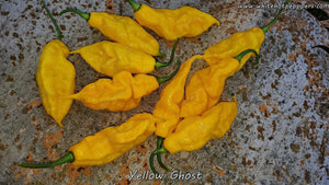 Yellow Ghost - Pepper Seeds - White Hot Peppers