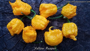 Yellow Reaper - Pepper Seeds - White Hot Peppers