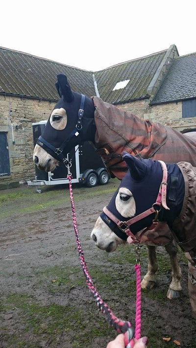 Winter Under Rugs for Horses & Ponies