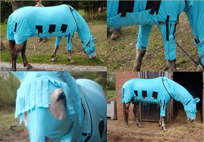 The Best Fly Rugs For Horses: Stop Fly Bites In Horse